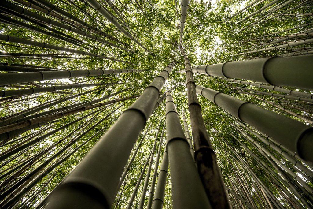 ozone layer von Natur aus antibakterielle Wirkung